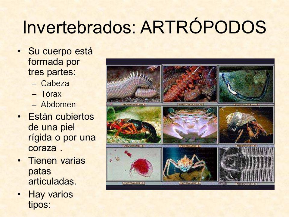 Invertebrados: ARTRÓPODOS