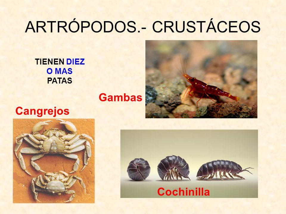 ARTRÓPODOS.- CRUSTÁCEOS
