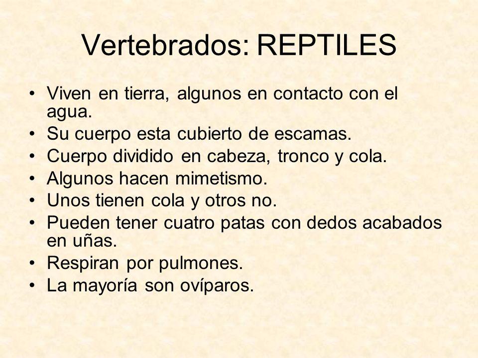 Vertebrados: REPTILES