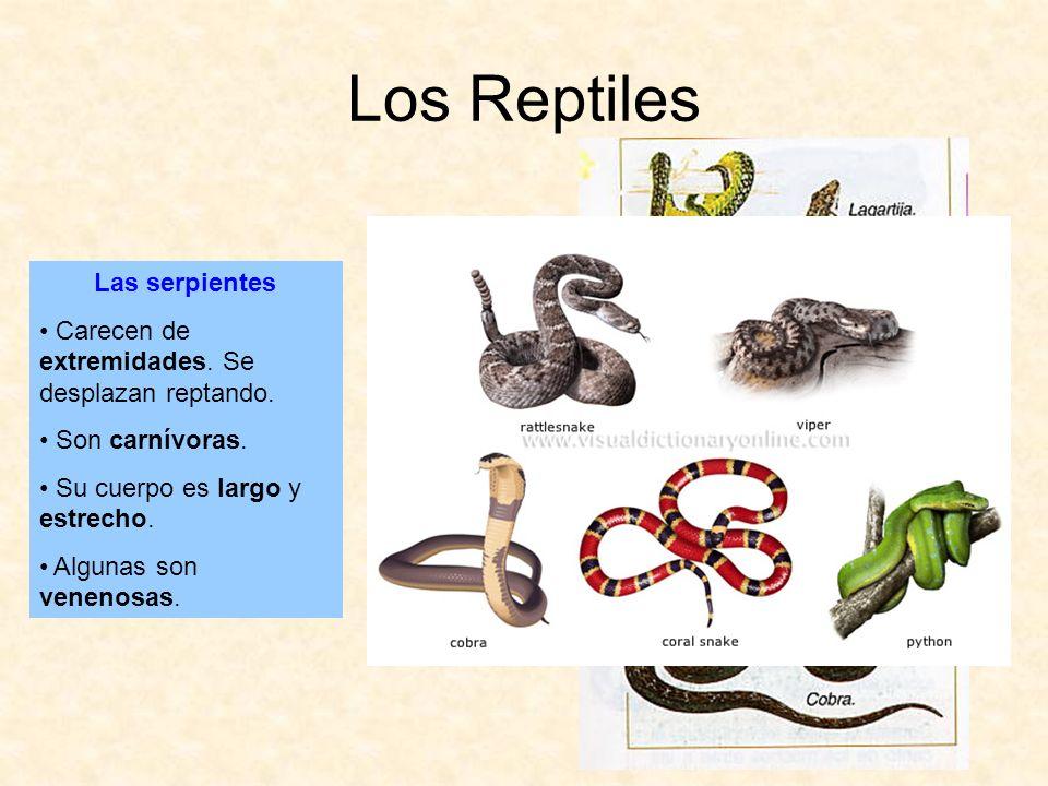 Los Reptiles Las serpientes