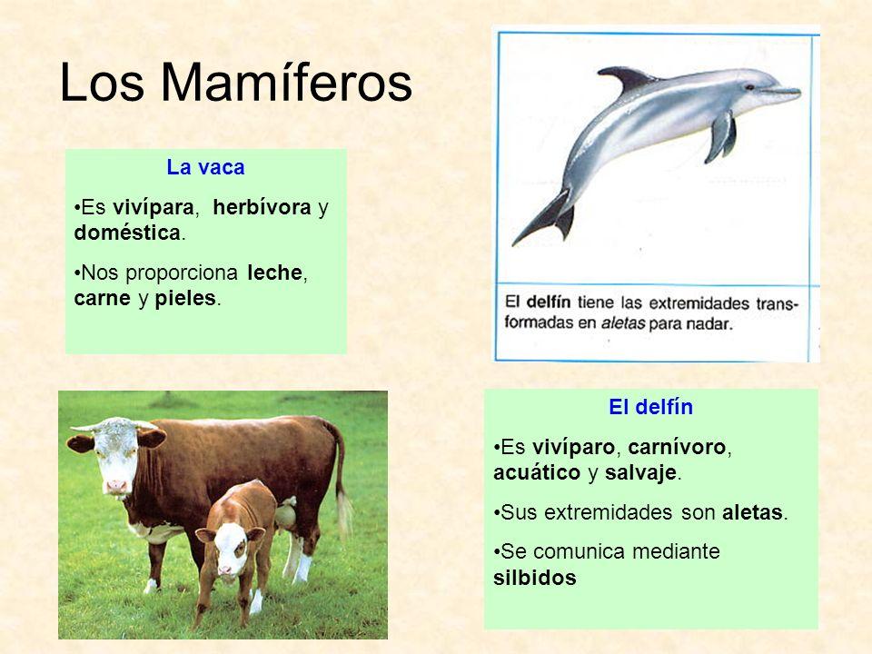 Los Mamíferos La vaca Es vivípara, herbívora y doméstica.