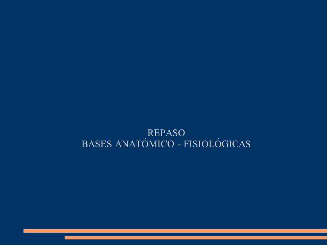 REPASO BASES ANATÓMICO - FISIOLÓGICAS