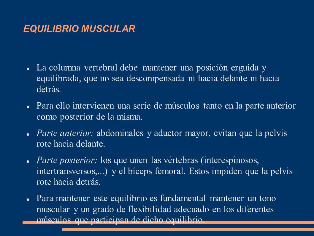 EQUILIBRIO MUSCULAR