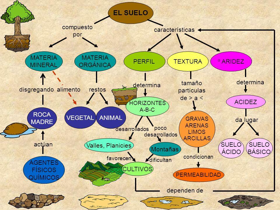 EL SUELO compuesto por características MATERIA MINERAL MATERIA