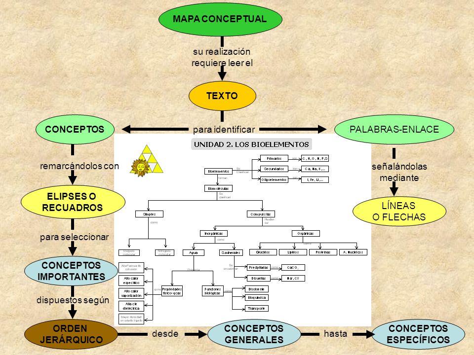 MAPA CONCEPTUAL su realización. requiere leer el. TEXTO. CONCEPTOS. PALABRAS-ENLACE. para identificar.