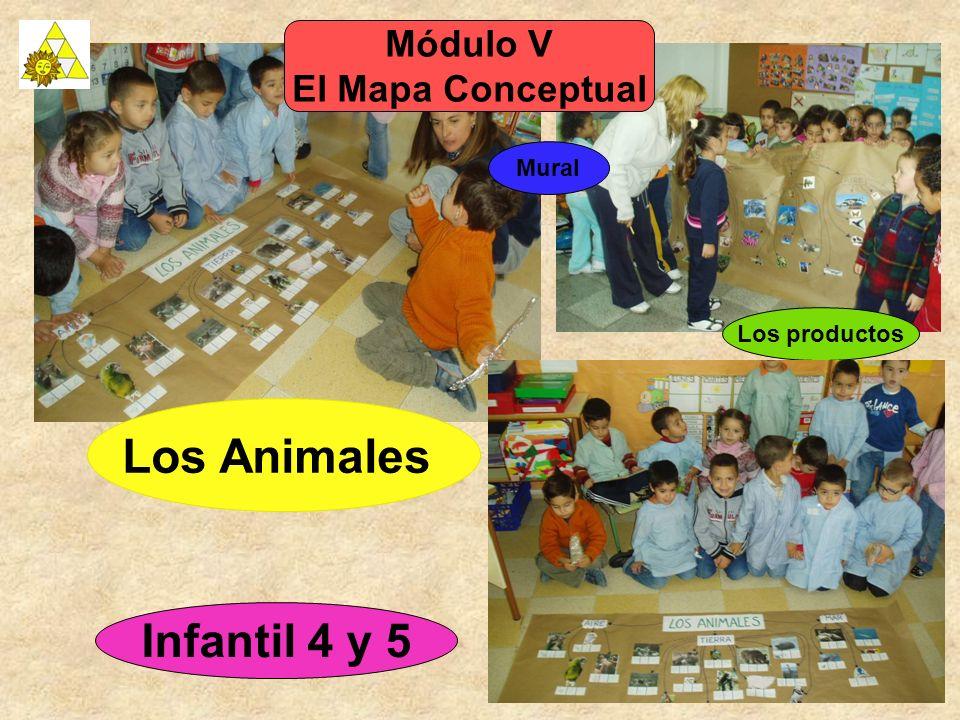 Los Animales Infantil 4 y 5 Módulo V El Mapa Conceptual Mural