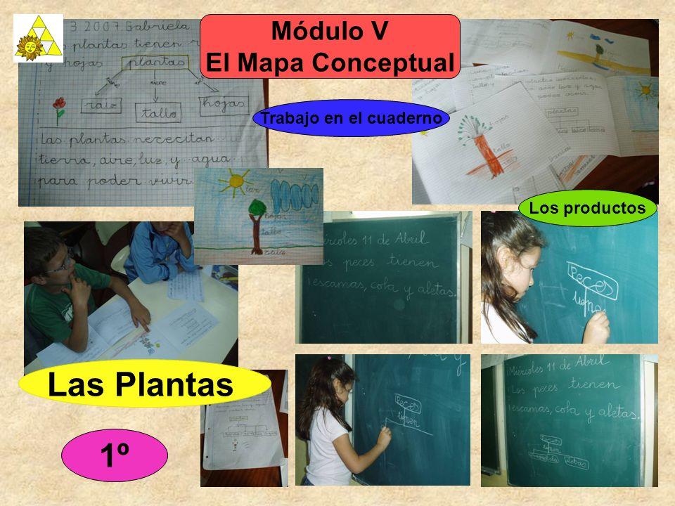 Las Plantas 1º Módulo V El Mapa Conceptual Trabajo en el cuaderno