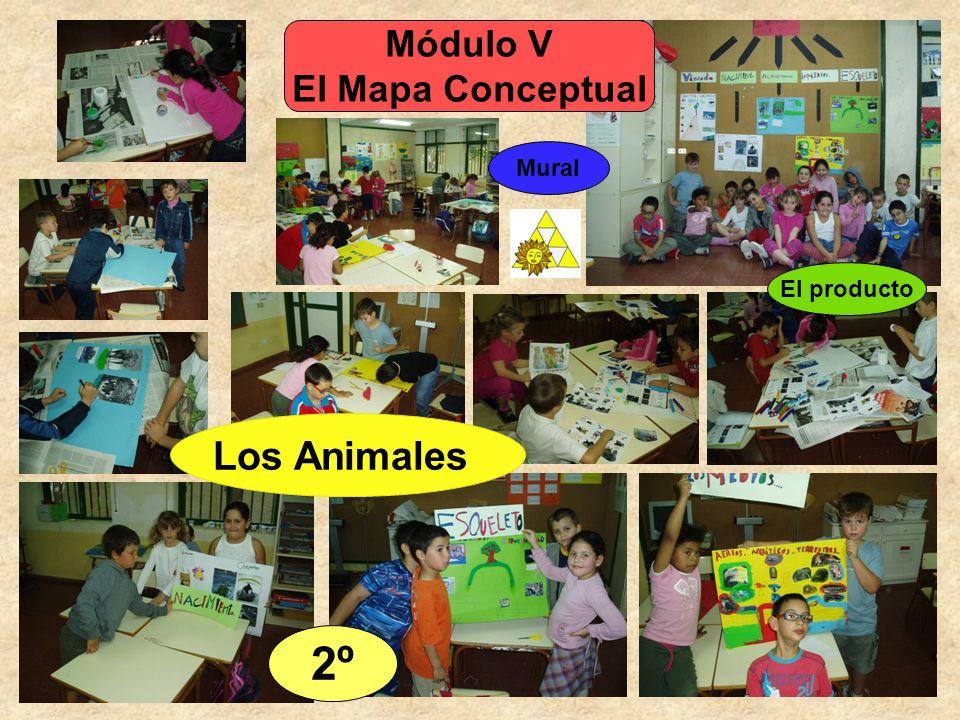 Módulo V El Mapa Conceptual Mural El producto Los Animales 2º