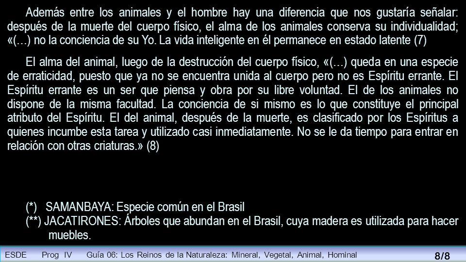 (*) SAMANBAYA: Especie común en el Brasil