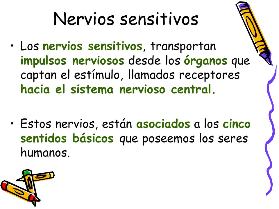 Nervios sensitivos