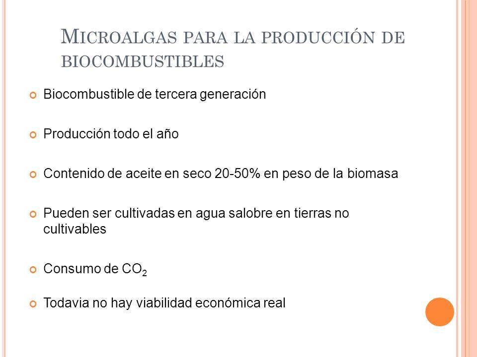 Microalgas para la producción de biocombustibles