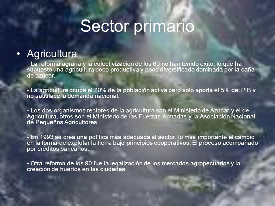 Sector primario Agricultura