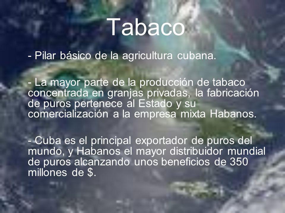Tabaco - Pilar básico de la agricultura cubana.