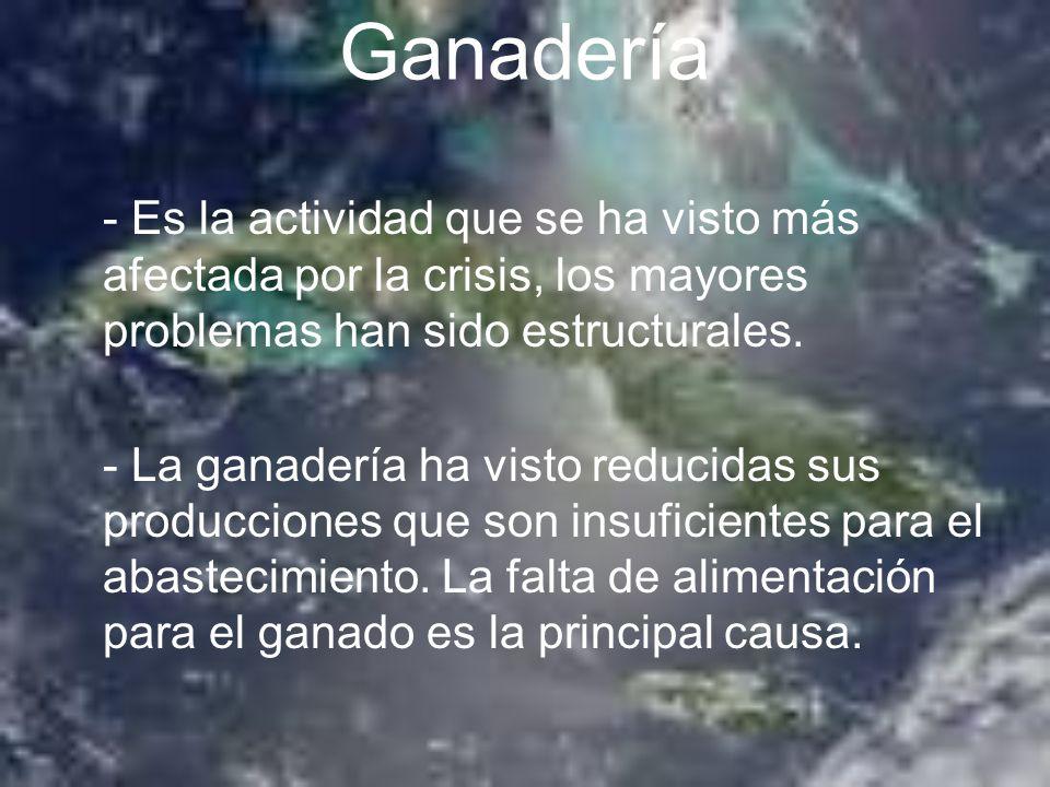 Ganadería - Es la actividad que se ha visto más afectada por la crisis, los mayores problemas han sido estructurales.