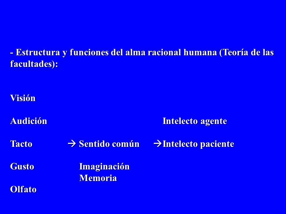 - Estructura y funciones del alma racional humana (Teoría de las facultades): Visión. Audición Intelecto agente.