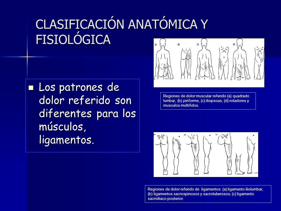 Bonito Anatomía Y Fisiología Del Dolor Adorno - Anatomía de Las ...