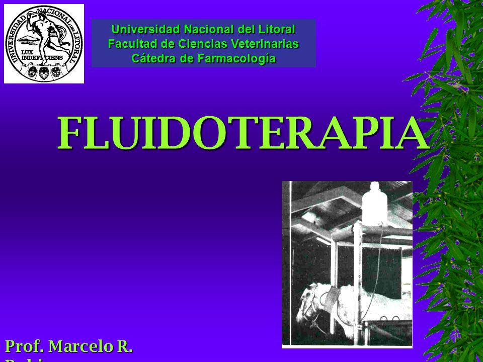 FLUIDOTERAPIA Prof. Marcelo R. Rubio Universidad Nacional del Litoral