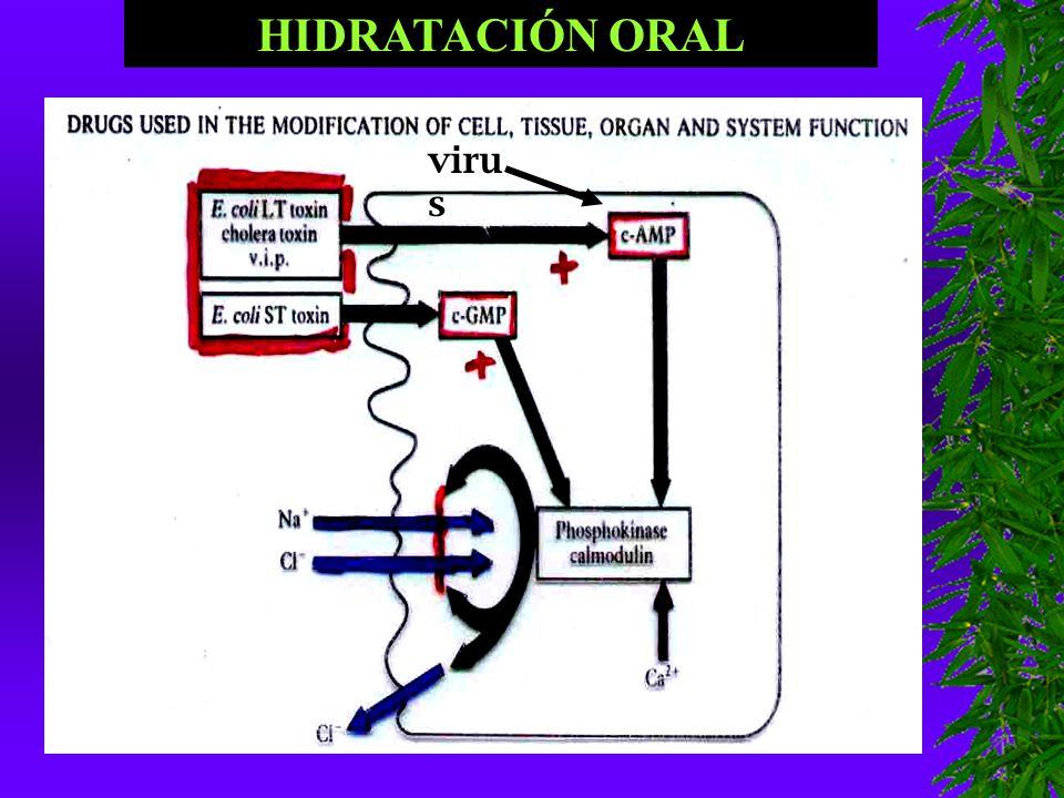 HIDRATACIÓN ORAL virus