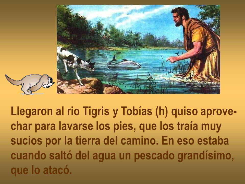 Llegaron al rio Tigris y Tobías (h) quiso aprove-