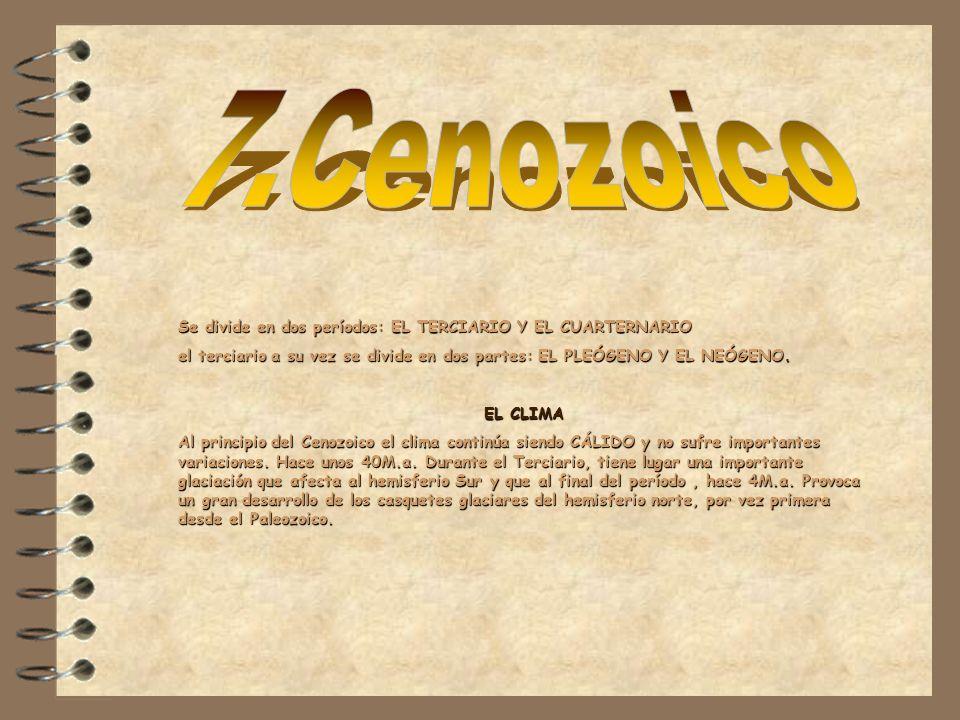 7.Cenozoico Se divide en dos períodos: EL TERCIARIO Y EL CUARTERNARIO