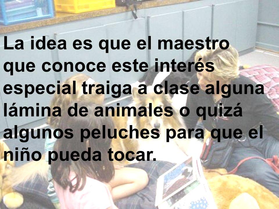 La idea es que el maestro que conoce este interés especial traiga a clase alguna lámina de animales o quizá algunos peluches para que el niño pueda tocar.
