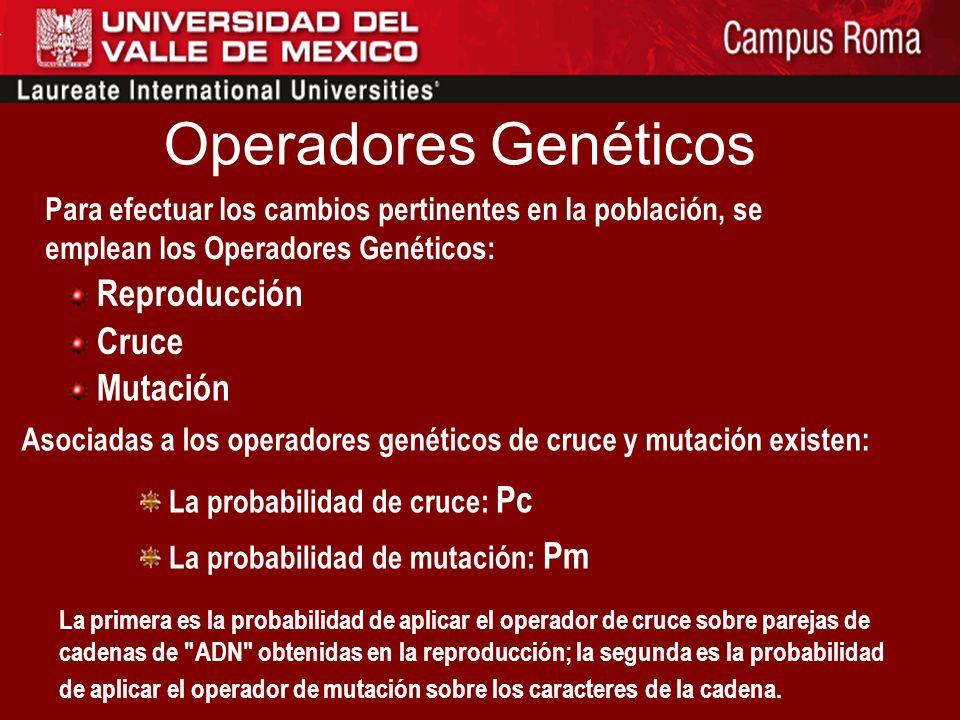 Operadores Genéticos Para efectuar los cambios pertinentes en la población, se emplean los Operadores Genéticos: