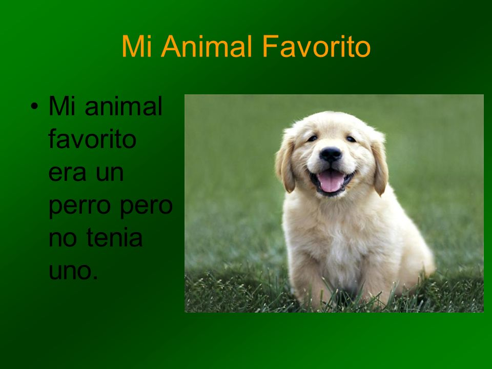 Mi Animal Favorito Mi animal favorito era un perro pero no tenia uno.