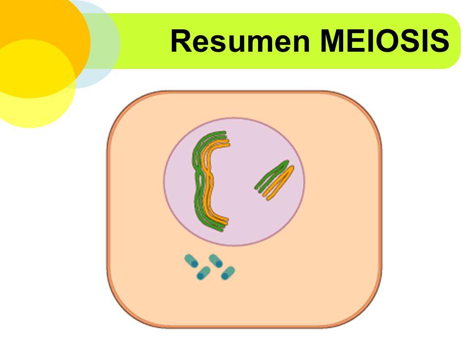 Resumen MEIOSIS