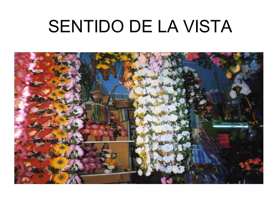 SENTIDO DE LA VISTA