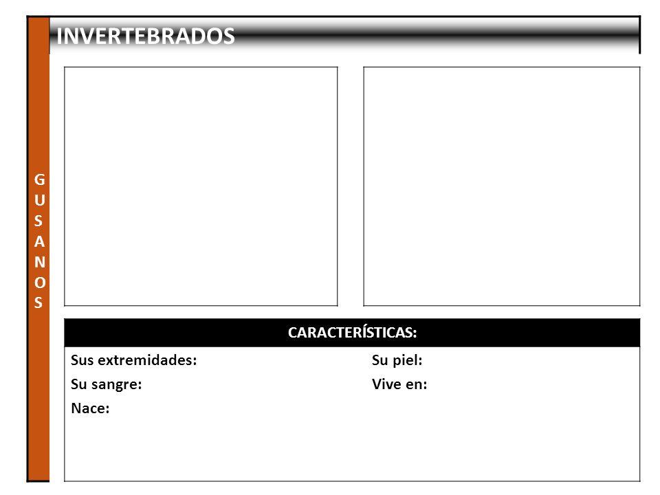 GUSANOS INVERTEBRADOS CARACTERÍSTICAS: Sus extremidades: Su sangre: