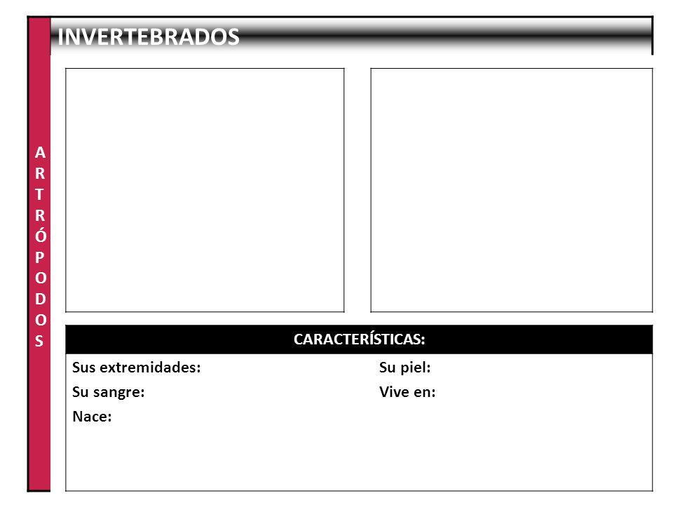 ARTRÓPODOS INVERTEBRADOS CARACTERÍSTICAS: Sus extremidades: Su sangre: