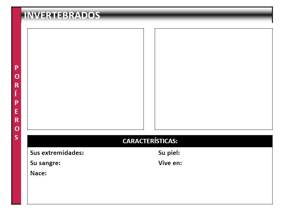 PORÍPEROS INVERTEBRADOS CARACTERÍSTICAS: Sus extremidades: Su sangre: