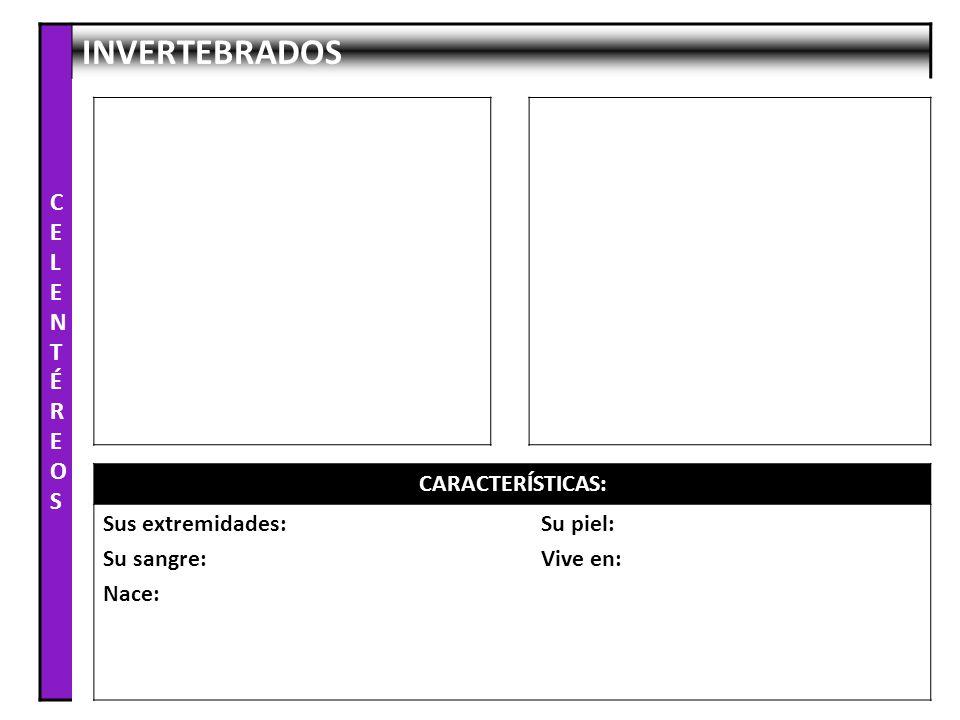 CELENTÉREOS INVERTEBRADOS CARACTERÍSTICAS: Sus extremidades: