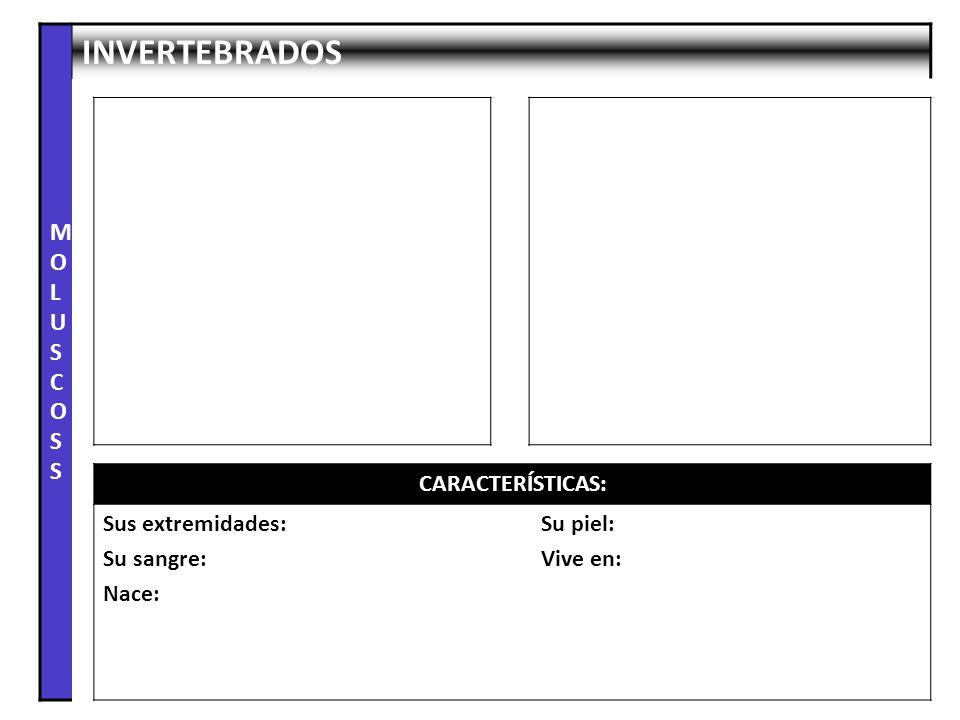 MOLUSCOSS INVERTEBRADOS CARACTERÍSTICAS: Sus extremidades: Su sangre: