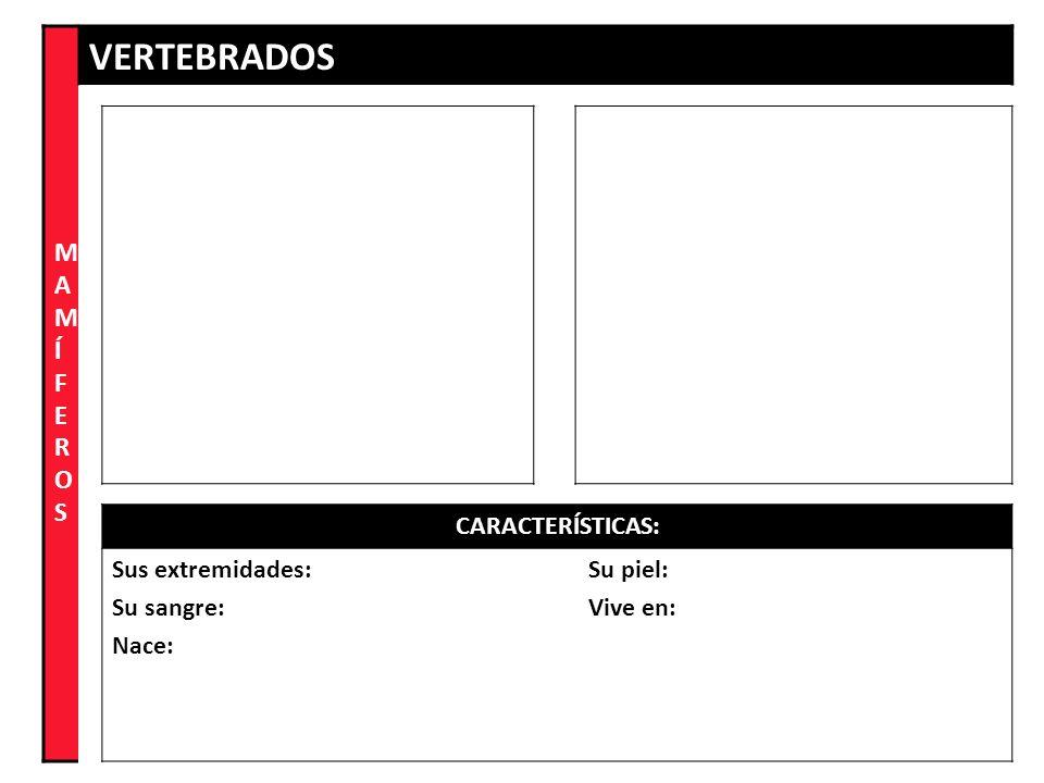 MAMÍFEROS VERTEBRADOS CARACTERÍSTICAS: Sus extremidades: Su sangre: