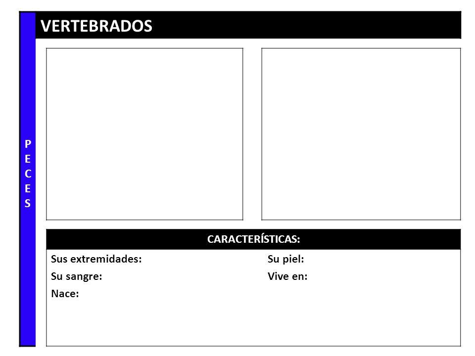 PECES VERTEBRADOS CARACTERÍSTICAS: Sus extremidades: Su sangre: Nace: