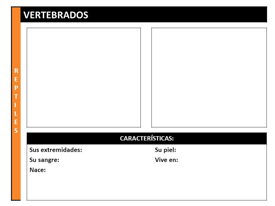 REPTILES VERTEBRADOS CARACTERÍSTICAS: Sus extremidades: Su sangre: