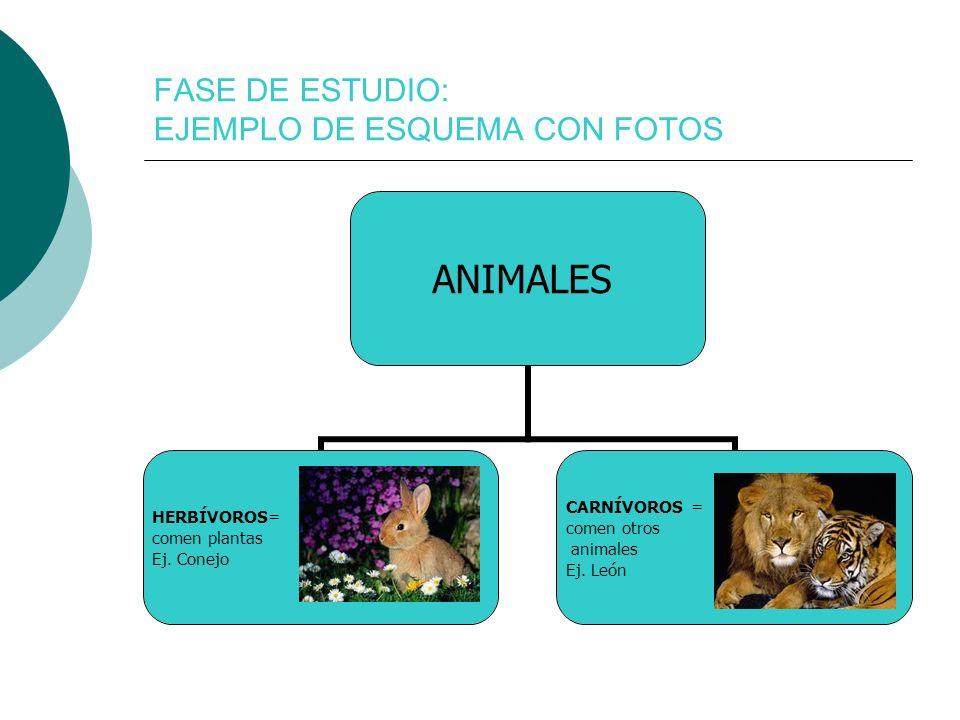 FASE DE ESTUDIO: EJEMPLO DE ESQUEMA CON FOTOS