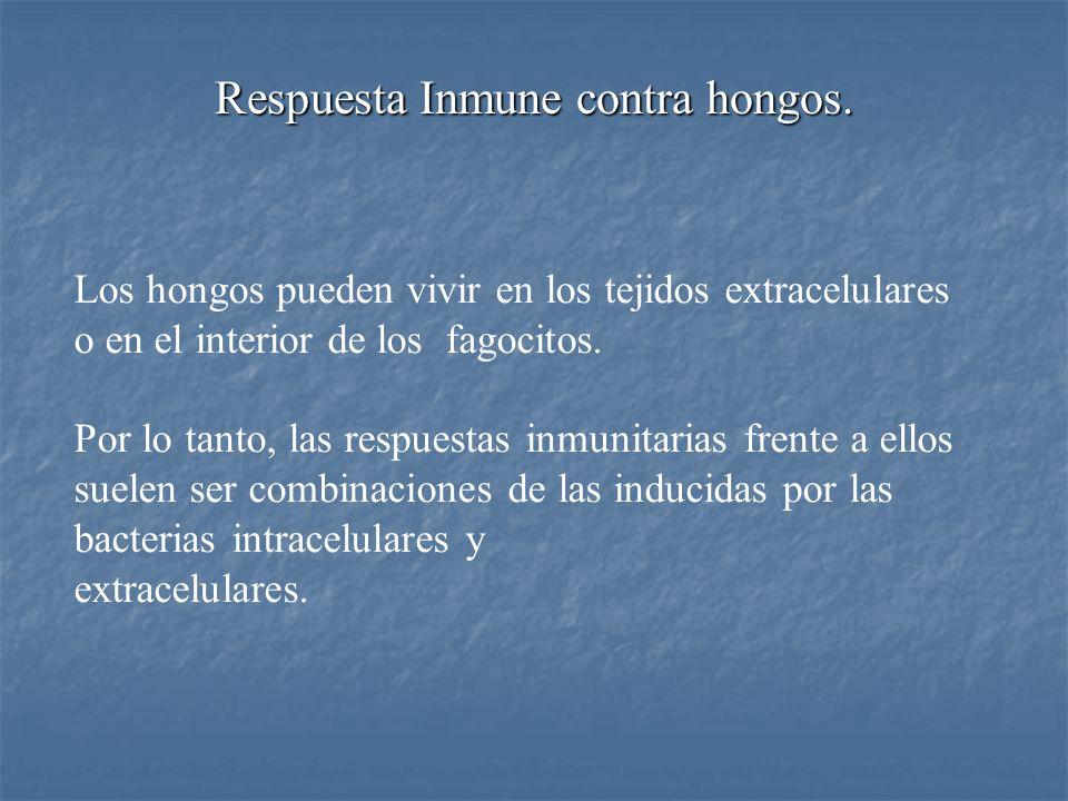 Respuesta Inmune contra hongos.