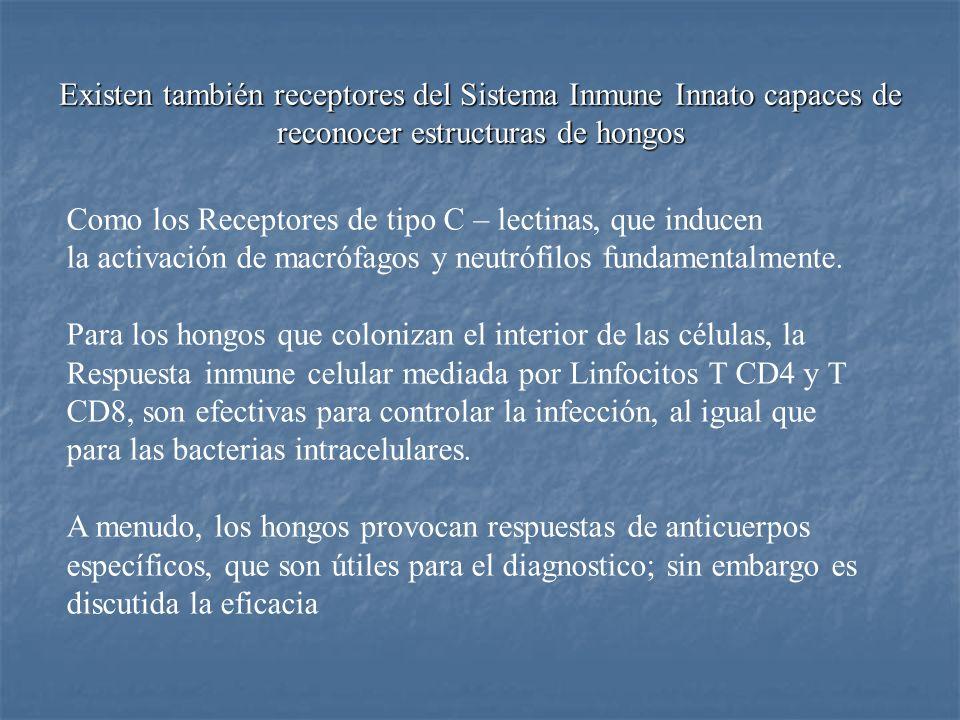 Existen también receptores del Sistema Inmune Innato capaces de reconocer estructuras de hongos