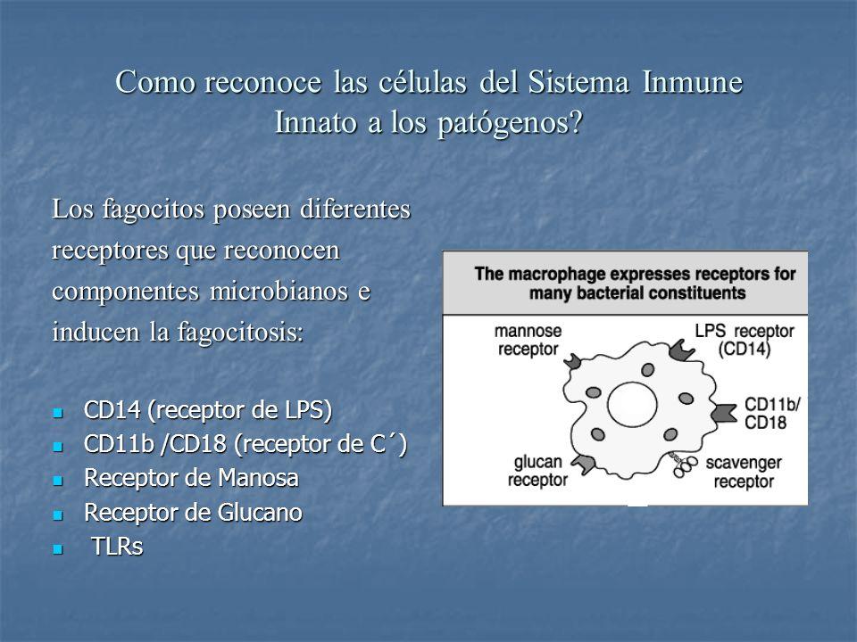 Como reconoce las células del Sistema Inmune Innato a los patógenos