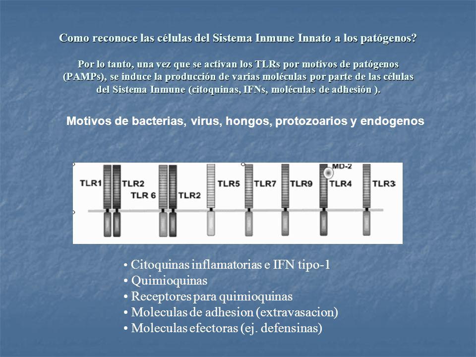 Receptores para quimioquinas Moleculas de adhesion (extravasacion)