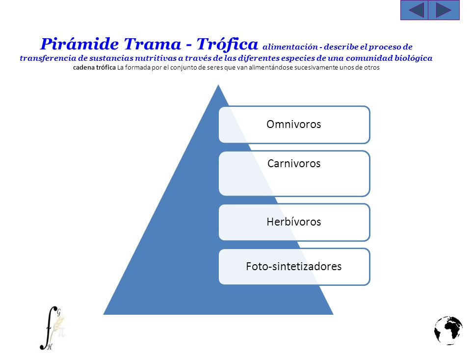 Pirámide Trama - Trófica alimentación - describe el proceso de transferencia de sustancias nutritivas a través de las diferentes especies de una comunidad biológica cadena trófica La formada por el conjunto de seres que van alimentándose sucesivamente unos de otros