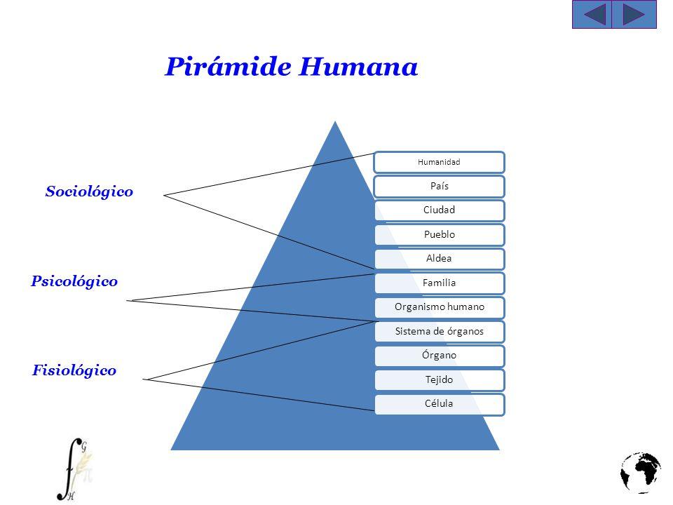 Pirámide Humana Sociológico Psicológico Fisiológico Ingenieria