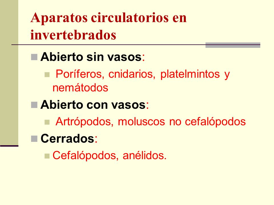 Aparatos circulatorios en invertebrados