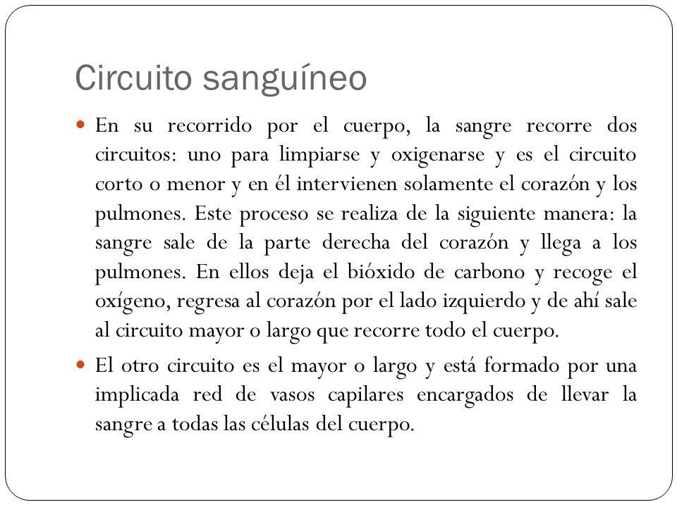Circuito Que Realiza La Sangre : Sistema circulatorio humano ppt descargar