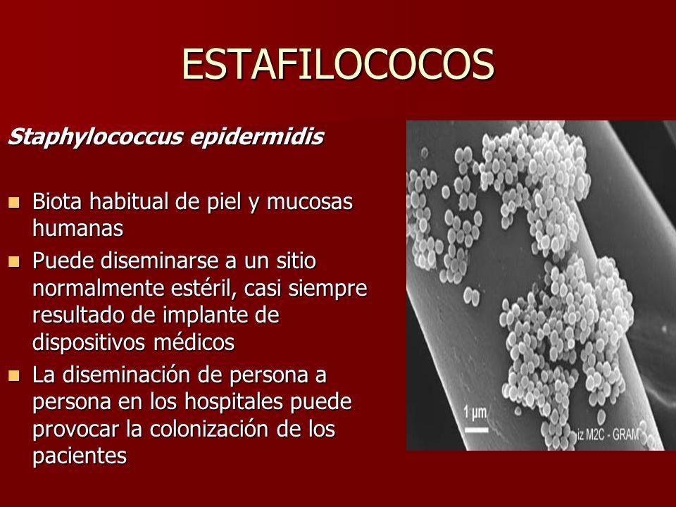 ESTAFILOCOCOS Staphylococcus epidermidis