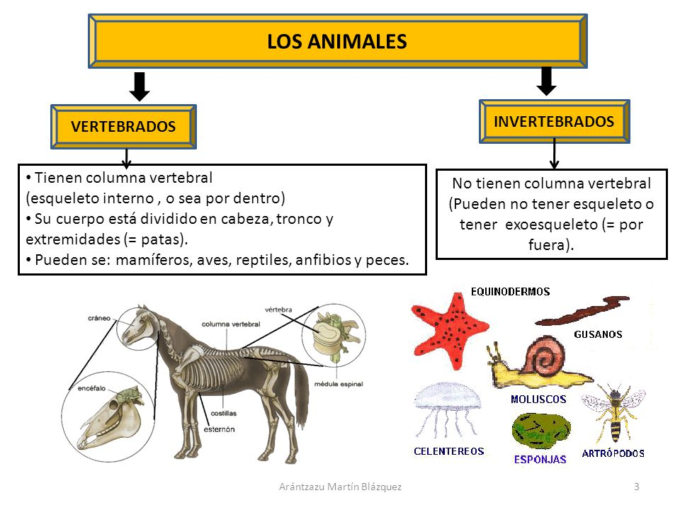 LOS ANIMALES VERTEBRADOS - ppt descargar