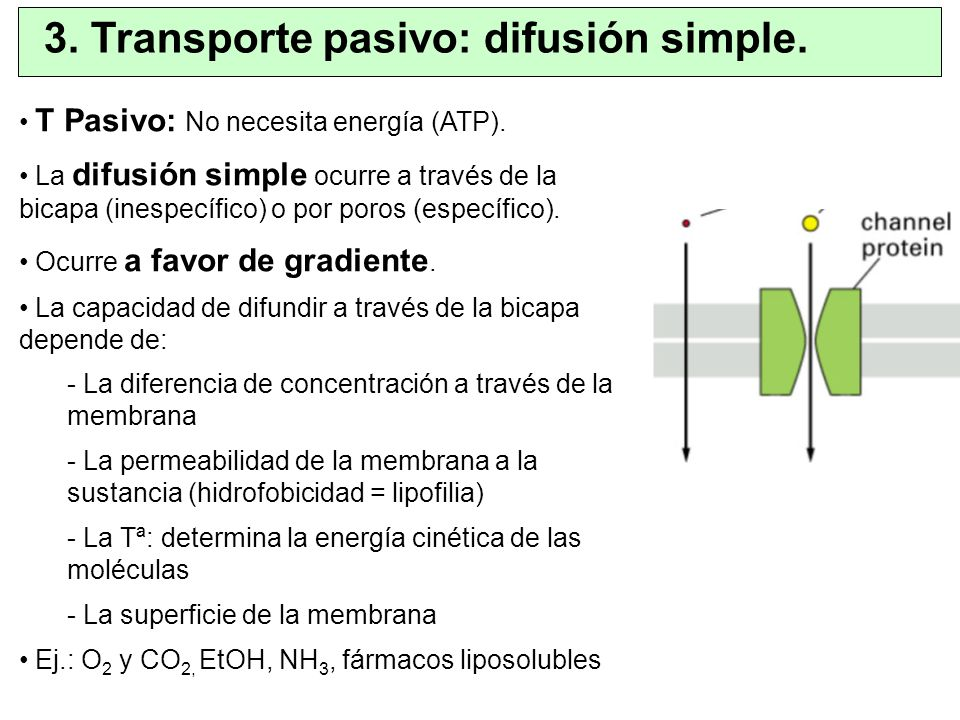 3. Transporte pasivo: difusión simple.