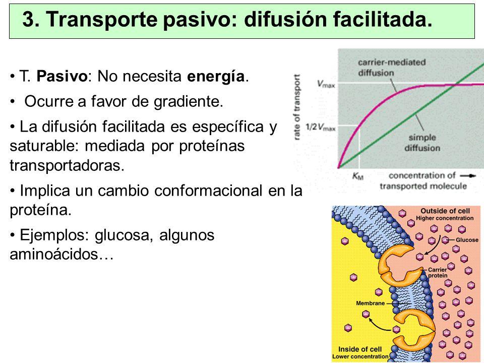 3. Transporte pasivo: difusión facilitada.